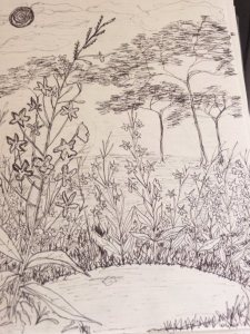 Safiya's doodling